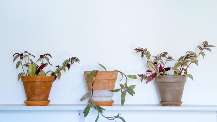 Quelques plantes pour une atmosphère propice à l'inspiration au Studio DPE