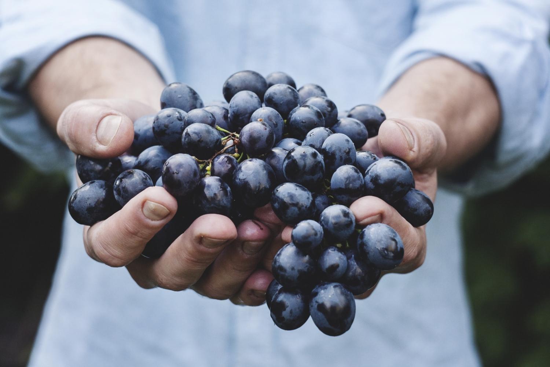 Un vigneron montrant son raisin, photo pour Destan. Un projet du Studio DPE.